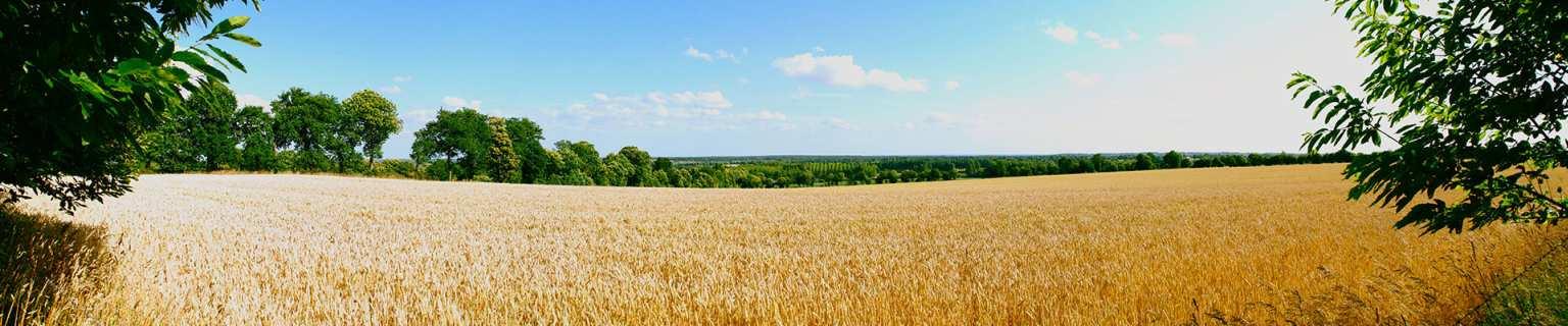 Beau champs de blé à la française